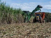 Paraná deve colher até 46 milhões de toneladas de cana-de-açúcar