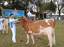 44ª Expoleite consolida tradição leiteira de Arapoti