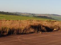 Justiça determinou o sequestro da próxima safra de trigo a ser colhida em outubro