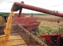 Soja teve participação de 53,5% nas exportações do agronegócio em junho (Agência Brasil/Arquivo)