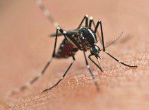 Casos de dengue continuam aumentando no Paraná