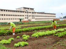 Trabalho de detentos na Penitenciaria Central do Estado em PIraquara.  13/09/2019 -Foto: Gilson Abreu/AEN